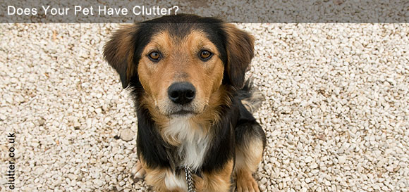 Does Your Pet Have Clutter?